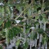 Ice storm, just before the snow started to fly. Community Photo By: Karen M. Scovill Submitted By: karen, Chandler
