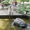 TORTOISE: Chris Hutson, senior keeper of amphibians, reptiles and fish at the Sedgwick County Zoo tries to entice Rocket out of the water. Jaime Oppenheimer/ The Wichita Eagle ORG XMIT: KOD