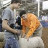 Livestock judge Jerry Fitch, PhD works with Walters student Cooper Baumann and his sheep during the Oklahoma Youth Expo at State Fair Park in Oklahoma City, OK, Thursday, March 15, 2012, By Paul Hellstern, The Oklahoman