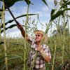 Dan Houser harvests sorghum for the 2010 Sorghum Day Festival. Photo by Jim Beckel, The Oklahoman Archives