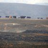 A line of cows walk in area burnt by a wildfire in the Banning Bench area of Riverside county on Wednesday, May 1, 2013 in Banning, Calif. (AP Photo/The Desert Sun, Richard Lui)