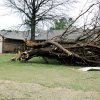 Tree uprooted in Edmond. PHOTO BY JOHN A. WILLIAMS, THE OKLAHOMAN