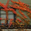 Fall foliage is seen on the south side of town on Wednesday, Oct. 30, 2013 in Norman, Okla. Photo by Steve Sisney, The Oklahoman