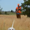 Photo - A bird dog on the hunt for quail. Several bird dog seminars are scheduled at the Oklahoma Wildlife Expo. Photo by Wade Free