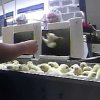 Photo - FILE - This file photo provided by Mercy for Animals, shows a frame grab from a video made by an undercover member of the group of male chicks being tossed into a grinder at an Iowa hatchery. The yearslong fight over laws prohibiting secretly filmed documentation of animal abuse is moving from state legislatures to federal courts as laws in Utah and Idaho face constitutional challenges. Half of U.S. states have attempted to pass so-called ag-gag laws, but only seven have been successful. (AP Photo/Mercy for Animals, File)