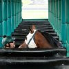 Photo - HORSE RACING: Ryan Andrews calms a horse as he brings it into a chute in the sttarting gate  at Remington Park Racetrack on Tuesday morning,  Aug. 16, 2011.  by Jim Beckel, The Oklahoman.  ORG XMIT: KOD