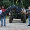 Photo - In this Saturday, Aug 16, 2014 photo, A monster alligator weighing 1011.5 pounds measuring 15-feet long is pictured in Thomaston, Ala. The alligator was caught in the Alabama River near Camden, Ala., by Mandy Stokes at right, along with her husband John Stokes, at her right, and her brother-in-law Kevin Jenkins, left, and his two teenage children, Savannah Jenkins, 16, and Parker Jenkins, 14, all of Thomaston, Ala. (AP Photo/Al.com, Sharon Steinmann)