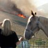 "Barb Otte of West Richland holds a neighbor's horse as she watches a line of flames head across Red Mountain in West Richland, Wash., late Monday afternoon Aug. 13, 2012. Several of Kelly Arthur-Moore's neighbors rushed to help her pull three horses and other pets out of harms way. ""That's just what neighbors do,"" Otte said. Firefighters from several Mid-Columbia agencies attacked the blaze that burned a large portion of the north side of Red Mountain. AP photo"