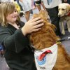 Third-grader Kayla Holt, 10, pets Calie, a therapy dog from Oklahoma City with Therapy Dogs International, during a meet and greet with teachers and students from Plaza Towers Elementary at Eastlake Elementary School in Oklahoma City, Thursday, May 23, 2013. Seven Plaza Towers students died when a tornado destroyed the school in Moore, Okla., on Monday. Holt was out of school on Monday to help her grandmother from Shawnee whose home was destroyed by a tornado on Sunday. She and her parents made it into an interior closet at their home in Moore just as the tornado destroyed the house. Photo by Nate Billings, The Oklahoman