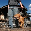 Walt Harmon, 24, walks with his dog, Pal, a mutt, past what\'s left of his family\'s home Tuesday afternoon, July 19, 2011. The dog awakened Walt\'s mother, Susan Harmon with constant barking Sunday night when their home caught fire. Walt credits the pet with saving his life and allowing him to rescue his mother, and her parents, Harold and Donna Gilliam. from the smoke-filled home before it was destroyed by flames. The home is in rural Lincoln County about six miles north of Jacktown. Photo by Jim Beckel, The Oklahoman