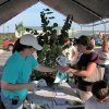 Edmond\'s Urban Forester Carrie Tomlinson gave away 300 trees during the Open House hosted by Edmond Electric and the City Water Resources Department. Thursday\'s event drew a crowd of over 1000 adults and children. Community Photo By: Jeremy Sanchez, City of Edmond Submitted By: Claudia, Edmond