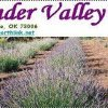News - 7th Annual Lavender Festival, Saturday, June 11, 2011
