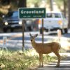 FILE - In this Aug. 26, 2013 file photo, a deer takes refuge alongside the road in the city of Groveland, Calif., on the edge of the Rim Fire which continues to burn in the Stanislaus National Forest. It doesn\'t pay to be a dateline in a disaster story, as the folks around Groveland will tell you. On what would have been the busiest weekend of the summer had the Strawberry Music Festival not been cancelled, hotel rooms are empty and the local coffee roaster got rid of all 6 employees because the road to Yosemite is closed. One hotelier has had $20,000 in cancellations just this week. In the park, tourists are enjoying elbow room as hard-to-get campsite and lodging rooms are full but day tourists are staying away out of fear of fire and smoke. (AP Photo /Elias Funez, The Modesto Bee, File) LOCAL TV OUT (KXTV10, KCRA3, KOVR13, FOX40, KMAX31, KQCA58, CENTRAL VALLEY TV); LOCAL PRINT OUT (TURLOCK JOURNAL, CERES COURIER, OAKDALE LEADER, MODESTO VIEW, PATTERSON IRRIGATOR, MANTECA BULLETIN, RIPON, RECROD, SONORA UNION DEMOCRAT, AMADOR LEDGER DISPATCH, ESCALON TIMES, CALAVERAS ENTERPRISE, RIVERBANKS NEWS) LOCAL INTERNET OUT (TURLOCK CITY NEWS.COM, MOTHER LODE.COM)