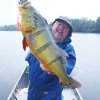 Photo - Gary Giuduce holds up a peacock bass he caught on the Amazon River. PHOTO PROVIDED