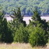 Photo - Eastern redcedar trees cover the shore of Arcadia Lake in Edmond. The invasive trees are causing problems throughout the state, according to conservation officials. By Paul B. Southerland