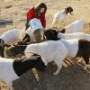 Taylor Muller, 15, feeds goats on her family\'s farm near Martha, Okla., Monday, Nov. 28, 2011. A proposal from the Department of Labor would affect what youth can do when working on farms. Photo by Nate Billings, The Oklahoman