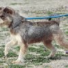 Cookie is an 18 month old, spayed female, terrier mix available at Norman Animal Welfare, 3428 South Jenkins, on Thursday, Feb. 2, 2012, in Norman, Okla. She is current on shots and tests and has an identifying micro chip implant. The fee is $60. For additional information call 405 292 9736. Photo by Steve Sisney, The Oklahoman