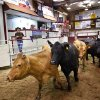 Cows are paraded through the sale arena at the Woodward Livestock Auction on Tuesday, July 26, 2011. This summer\'s drought has led many ranchers and producers to sell their cattle early. On a recent Tuesday, about seven times the normal number of cattle were sold at Woodward Livestock Auction . Lack of rain and a string of days when temperatures exceeded 100 degrees have created extreme conditions for farmers, ranchers and citizens of many communities in western Oklahoma. Photo by Jim Beckel, The Oklahoman