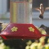 My brother had six hummingbirds at the bird feeder on his front porch this morning. Look closely, and you\'ll see three of them in this picture. Community Photo By: Mark StCyr Submitted By: P, Edmond