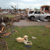 A misplaced dog is seen among debris in Tuscaloosa, Ala. Wednesday, April 27, 2011. A wave of severe storms laced with tornadoes strafed the South on Wednesday, killing at least 16 people around the region and splintering buildings across swaths of an Alabama university town. (AP Photo/The Tuscaloosa News, Dusty Compton)