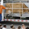 Ralph Keel demonstrates machine milking Ginger, a dairy cow, during the Southwest Dairy Farmers mobile classroom at Coolidge Elementary School, Friday, March 6, 2009. Photo By David McDaniel, The Oklahoman.