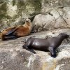Sea lions rest on rocks on South Marble Island in Southeast Alaska, Thursday, June 7, 2012. Photo by Sarah Phipps, The Oklahoman