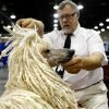 David Brock, 60, inspects his standard poodle Paige\'s cords at the Oklahoma City Dog Show at the Cox Convention Center in Oklahoma City Friday, June 26, 2009. Brock cords her hair instead of poofing it because it is a different style which will make her stand out. Photo by Ashley McKee, The Oklahoman