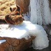 A Grizzly at the OKC Zoo on 2/13/14 enjoying the snow and ice. Photo by Ruthann Lach