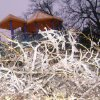 WINTER / COLD / WEATHER / ICE STORM: Ice in Hafer Park in Edmond, December 12, 2007. Photo by Tim Henley ORG XMIT: KOD