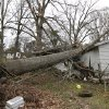 An uprooted tree sits in the home of Dorothy Dixon in Centreville, Miss. on Wednesday, Dec. 26, 2012. No one was home at the time the tree fell on Dixon\'s home, except for Dixon\'s dogs who were unharmed. More than 25 people were injured and at least 70 homes were damaged in Mississippi by the severe storms that pushed across the South on Christmas Day, authorities said Wednesday. (AP Photo/The Enterprise-Journal, Philip Hall)
