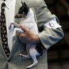 Ch. Barbery\'s Love Letter, a Toy Fox Terrier, is held by Gene Bellamy, of Oklahoma City, during the Oklahoma City Summer Classic Dog Show at the Cox Convention Center in Oklahoma City Sunday, June 28, 2009. Photo by John Clanton, The Oklahoman