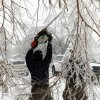 Purcell firefighter Jason Benefiel cuts limbs obstructing traffic on city streets on Friday, Jan. 29, 2010, in Purcell, Okla. after a winter storm. Photo by Steve Sisney, The Oklahoman