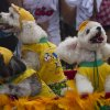 Dogs wear Brazil\'s national soccer team jerseys during the