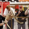 Joe Martin in his snake pen at the Oklahoma Tackle and Hunting Show inside the Cox Convention Center in downtown Oklahoma City, Friday, Jan. 28, 2011. Martin\'s company is called Joe Martin and his Snakes of Texas. The show continues through this weekend. Photo by Jim Beckel, The Oklahoman