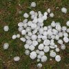 pile of hail, MWC Community Photo By: Shay Morris Submitted By: Shay, Oklahoma City