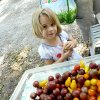 Photo - Hannah Defatta, 4, selects some tomatoes from Ruth Kammerlocher's stand at a farmers market Sunday at The Earth Natural Foods, 309 S Flood Ave.