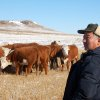 In this Nov. 15, 2012 photo Mananbai Sadykov looks over cattle on the Helbling Hereford Ranchnear Mandan, N.D. Sadykov was one of about 15 Kazakh cattlemen who visited North Dakota ranches in November to inspect the state\'s beef herd, while getting a hands-on tutorial in tending cattle from veteran cowboys. (AP Photo/James MacPherson)