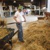Seth Everett, 9, cleans hay at the Cleveland County Free Fair in Norman, Saturday, Sept. 11, 2010. Photo by Doug Hoke, The Oklahoman.