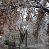 WINTER / COLD / WEATHER / ICE STORM / OU: A bench is reflected in a pool of water surrounded by ice-heavy trees on the University of Oklahoma campus. ORG XMIT: 0712102137161371