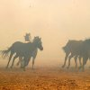 Community Photo By: Mike Howard Submitted By: Mike, OKC Horses trapped by fire in SE OKC.