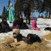 Village children watch as Iditarod musher Martin Buser, from Big Lake, Alaska, cares for his dog team at the Koyuk checkpoint during the 2014 Iditarod Trail Sled Dog Race on Sunday, March 9, 2014. (AP Photo/The Anchorage Daily News, Bob Hallinen)