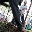 Jeremy Boggs (right) and Glenn Pennington (foreground) plant a tree at Reaves Park in Norman, Okla., on Sunday, April 19, 2009. Photo by John Clanton, The Oklahoman