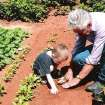 My grandson is such a joy to my life, he stays with his nana & I while his mother works.  He follows me everywhere I go and he always wants to help.  This photo is he and I gardening.  He loves to help me plant and he also loves to eat the foods out of the garden.  He loves radishes, onions, turnips & tomatoes.  He knows where I keep all of the garden tools & etc.  One day I was not home and his nana was looking for a tool, he said Nana I know where it is and he went right to it.  He is a great help.  His name is Jackson and he is 4 years old and very smart.  Community Photo By:  James Womack  Submitted By:  Lindsay, Edmond