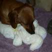 """Cody-Cowboy and """"Bunny"""".This is Cody's best friend in the world.When he's stressed or just tired,he nurses on Bunny.Bunny's ears have been cut off to repair Bunny's rear-end where Cody nurses. He's been repaired 4 times in the past 6 yrs that Cody has had him which is since Cody was 8 wks old.  Community Photo By:  Carol Qualls  Submitted By:  Carol, Oklahoma City"""
