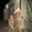 Caleb Bearden of Norman shot his first deer from over 100 yards away during the 2012 Youth Rifle Season. The doe weighed 140 lbs. on the hoof.