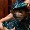 Dressed for the occasion, Eli, a Chihuahua, is held by his owner Karen Biehl of New York, as they wait for the start of the most expensive wedding for pets Thursday July 12, 2012 in New York. The black-tie fundraiser , where two dogs were