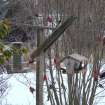Taken about 430p on Friday, Jan. 12. Many male and female cardinals and several other birds species flocked to feeders in our front yard despite the sleet that continued to come down on our rural eastern Oklahoma County home. We feed sunflower seeds for the cardinals and counted 15 red males although this photo doesn't show them all.  Community Photo By:  Lin Archer  Submitted By:  Lin, Harrah