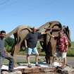 A larger-than-life bronze of a buffalo -- 'The Ancient One' -- graces the entrance to Sugar Hill residential development just north of Arcadia Lake. Gino Miles, the sculptor at right, is shown with assistant Gilberto Romero and Sugar Hill developer Barry Rice, center. The statue was installed Thursday and is part of Edmond's citywide effort to place art in public rights of way. The $54,000 statue is funded by Rice, who is an Edmond attorney and former city councilman, with $20,000 coming from City of Edmond funds. Rice's property is located in a historically significant area, where buffalo wallows still can be seen, and is perched above the old Route 66, shown in the background.  Community Photo By:  Photo Provided  Submitted By:  Carol, Edmond