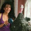 This Nov. 12, 2011 photo provided by Karen Dawn shows her pet turkey, Russell, getting his feathers blown dry at home in Pacific Palisades, Calif. They arrive stinky, so the first thing Dawn does is give them a bath and blow dry.