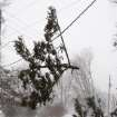 Cars pass under a branch from a fallen pine tree that dangles on a power line across West Ave. at the intersection of Morningside Dr. during the snowstorm Thursday Dec. 20, 2012 in Burlington, Iowa. The weather changed from rain to high winds causing white out conditions. (AP Photo/The Hawk Eye, John Gaines)